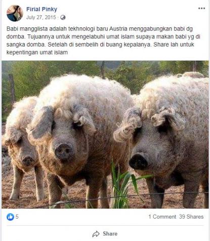 87 Gambar Babi Makan